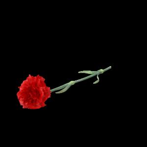 Cheap New York Limousine Carnation
